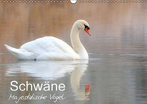 9783664819454: Schwäne - Majestätische Vögel (Wandkalender 2017 DIN A3 quer): Vom hässlichen Entlein zum stolzen Schwan (Monatskalender, 14 Seiten )