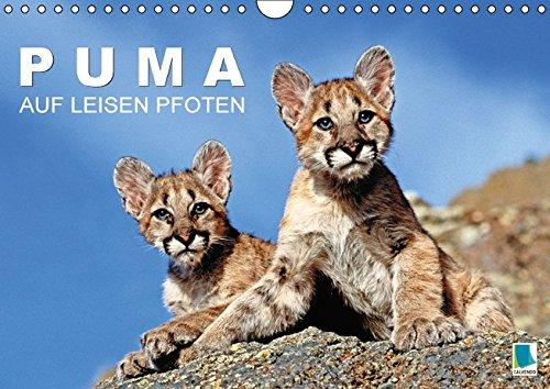 9783664819836: Puma: Auf leisen Pfoten (Wandkalender 2017 DIN A4 quer): Pumas: Geschmeidige Raubkatzen (Monatskalender, 14 Seiten)