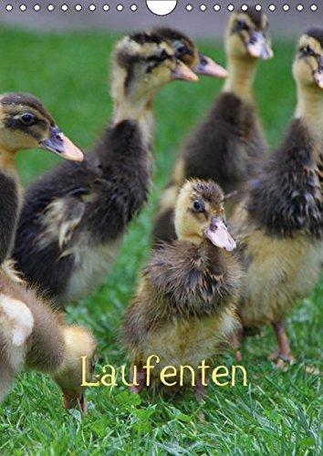 9783664866892: Laufenten (Wandkalender 2017 DIN A4 hoch): Enten (Monatskalender, 14 Seiten )