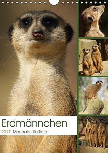 9783664870578: Erdmännchen-Meerkats-Surikate (Wandkalender 2017 DIN A4 hoch): Edrmännchen sind einfach putzige Kerlchen. (Monatskalender, 14 Seiten )