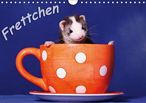 9783664873531: Frettchen - Ferrets (Wandkalender 2017 DIN A4 quer): lustige Kobolde (Monatskalender, 14 Seiten )