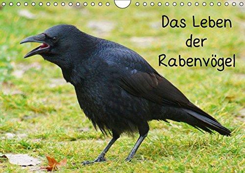 9783664913749: Das Leben der Rabenvögel (Wandkalender 2017 DIN A4 quer): Die Familie der Corvidae (Monatskalender, 14 Seiten )