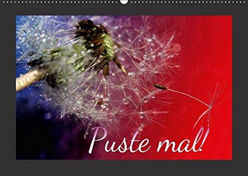 9783664928866: Puste mal! (Wandkalender 2017 DIN A2 quer): Edle Pusteblumen (Monatskalender, 14 Seiten )