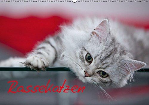 9783664961306: Rassekatzen (CH - Version) (Wandkalender 2017 DIN A2 quer): Wunderschöne und liebenswürdige Samtpfoten (Monatskalender, 14 Seiten )