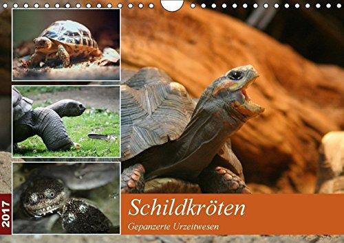 9783664974139: Schildkröten (Wandkalender 2017 DIN A4 quer): Schöne Fotos von Schildkröten zu Land und zu Wasser (Monatskalender, 14 Seiten) (CALVENDO Tiere)