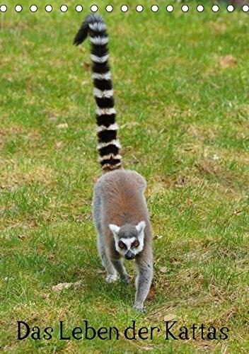 9783664980338: Das Leben der Kattas (Tischkalender 2017 DIN A5 hoch): Lemuren aus Madagaskar (Monatskalender, 14 Seiten )