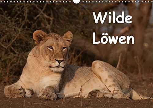 9783665017187: Wilde Löwen (Wandkalender 2017 DIN A3 quer): Wilde Löwen in Südafrika (Monatskalender, 14 Seiten )