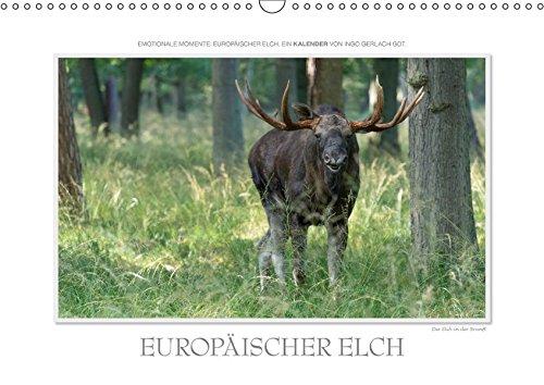 9783665085100: Emotionale Momente: Europäischer Elch. / CH-Version (Wandkalender 2017 DIN A3 quer): Ingo Gerlach GDT hat den europäischen Elch in wunderschönen und ... tierphoto.de (Monatskalender, 14 Seiten )