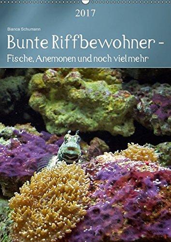 9783665124922: Bunte Riffbewohner - Fische, Anemonen und noch viel mehr (Wandkalender 2017 DIN A2 hoch): Tropische Riffe bieten eine große Vielfalt an Lebewesen und Farben (Planer, 14 Seiten)