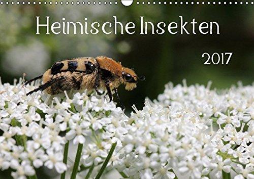 9783665130541: Heimische Insekten 2017 (Wandkalender 2017 DIN A3 quer): Nahaufnahmen von deutschen Gartenbewohnern (Monatskalender, 14 Seiten )
