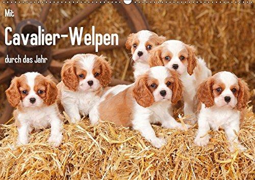 9783665159917: Mit Cavalier-Welpen durch das Jahr (Wandkalender 2017 DIN A2 quer): Cavalier King Charles Spaniel-Welpen in allen Farbschlägen begleiten Sie durchs Jahr. (Monatskalender, 14 Seiten )