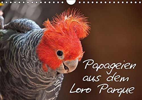 9783665182823: Papageien im Loro Parque (Wandkalender 2017 DIN A4 quer): Bildkalender mit Motiven aus dem Loro Parque (Monatskalender, 14 Seiten )
