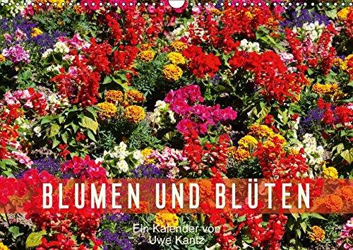 9783665197872: Blumen und Blüten (Wandkalender 2017 DIN A3 quer): Eine bunter Strauß schöner Blumen (Monatskalender, 14 Seiten )