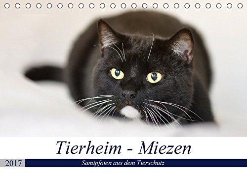 9783665202897: Tierheim-Miezen (Tischkalender 2017 DIN A5 quer): Kleine und große vierbeinige Individualisten warten auf ein neues Zuhause... (Monatskalender, 14 Seiten )