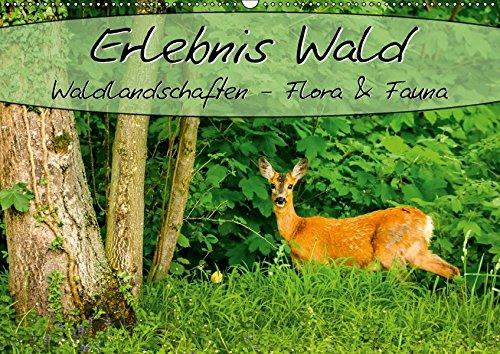 9783665225766: Erlebnis Wald (Wandkalender 2017 DIN A2 quer): Waldlandschaften, Flora und Fauna (Monatskalender, 14 Seiten )