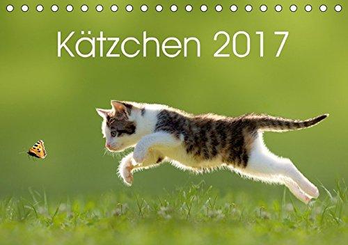9783665232290: Kätzchen 2017 (Tischkalender 2017 DIN A5 quer): Katzenkalender mit abwechslungsreichen und stimmungsvoll gestalteten Bildern passend zur Jahreszeit. (Monatskalender, 14 Seiten )