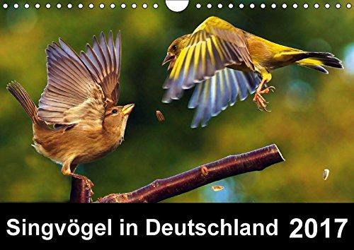 9783665256661: Singvögel in Deutschland (Wandkalender 2017 DIN A4 quer): Ein Vogelkalender mit herrlichen Impressionen unserer Singvögel (Monatskalender, 14 Seiten ) (CALVENDO Tiere)