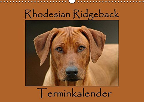 9783665259198: Rhodesian Ridgeback Terminkalender (Wandkalender 2017 DIN A3 quer): Monatlicher Terminplaner mit wunderschönen Rhodesian Ridgeback Fotografien. (Geburtstagskalender, 14 Seiten )