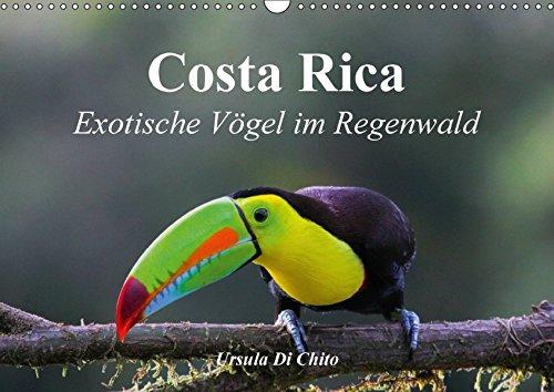 9783665265779: Costa Rica - Exotische Vögel im Regenwald (Wandkalender 2017 DIN A3 quer): Impressionen aus der Vogelwelt in Costa Rica (Monatskalender, 14 Seiten )