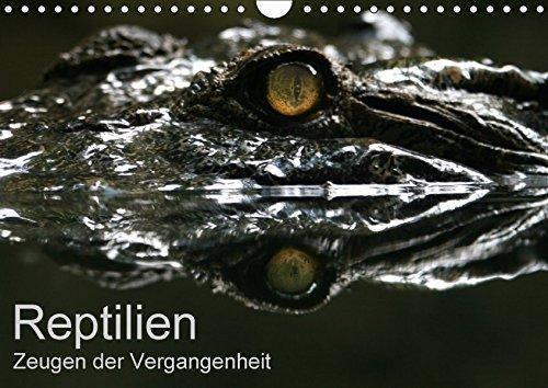 9783665296001: Reptilien - Zeugen der Vergangenheit (Wandkalender 2017 DIN A4 quer): Farbenprächtige Reptilien - fotografiert von Michael Herzog (Monatskalender, 14 Seiten )