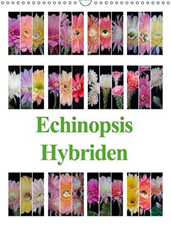 9783665300586: Echinopsis Hybriden (Wandkalender 2017 DIN A3 hoch): Echinopsis Hybriden sind Züchtungen aus der Kakteenfamilie. (Monatskalender, 14 Seiten )