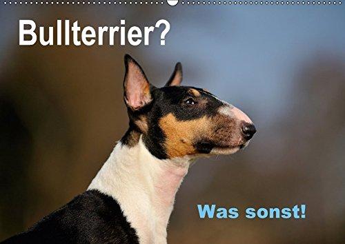 9783665311827: Bullterrier? Was sonst! (Wandkalender 2017 DIN A2 quer): Ein toller Kalender für Fans der Rasse Bullterrier. Sehr schön in Szene gesetzt von der ... Yvonne Janetzek (Monatskalender, 14 Seiten )
