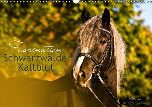 9783665320386: Faszination Schwarzwälder Kaltblut (Wandkalender 2017 DIN A3 quer): Kraftvoll, elegant und verspielt begleitet Sie das Schwarzwälder Kaltblut Pferd durch das Jahr (Monatskalender, 14 Seiten)