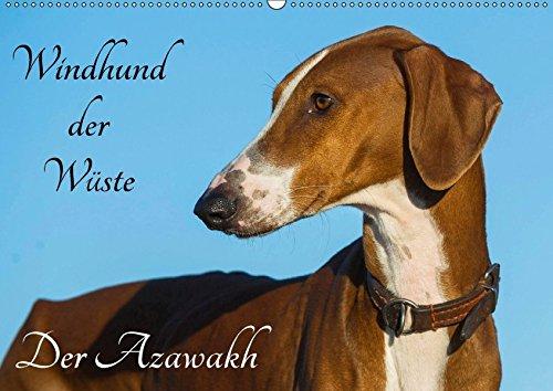 9783665335601: Windhund der Wüste - Der Azawakh (Wandkalender 2017 DIN A2 quer): Der Windhund der Tuareg, der Azawakh auf 13 hinreißenden Fotos (Monatskalender, 14 Seiten )