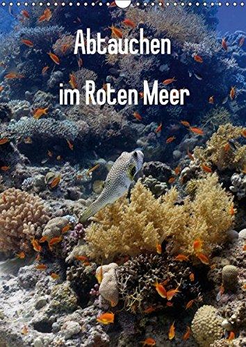 9783665336400: Abtauchen im Roten Meer (Wandkalender 2017 DIN A3 hoch): Erleben Sie die maritimen Hauptdarsteller in ihrer ganzen Pracht. (Monatskalender, 14 Seiten )