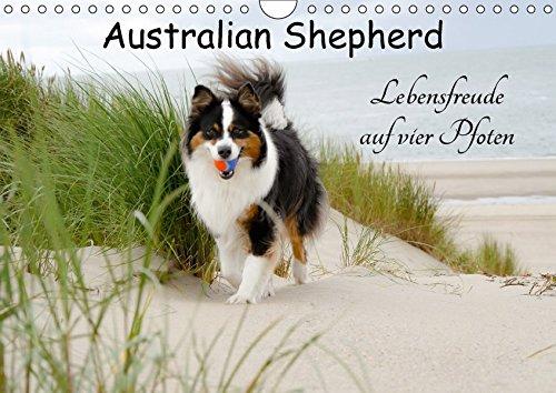 9783665363703: Australian Shepherd - Lebensfreude auf vier Pfoten (Wandkalender 2017 DIN A4 quer): Die Abenteuer eines powervollen Australian Shepherd (Monatskalender, 14 Seiten )