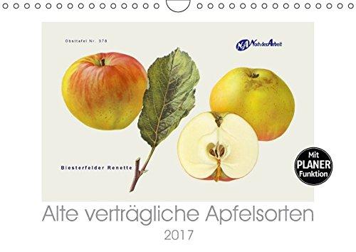 9783665365134: Alte verträgliche Apfelsorten (Wandkalender 2017 DIN A4 quer): Alte Apfelsorten, die auch von Allergikern oft gut vertragen werden. (Geburtstagskalender, 14 Seiten )