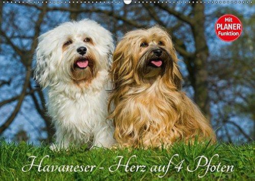 9783665379513 - Sigrid Starick: Havaneser - Herz auf 4 Pfoten (Wandkalender 2017 DIN A2 quer): Lassen Sie sich verzaubern von dieser entzückenden Kleinhunderasse (Geburtstagskalender, 14 Seiten ) - Book