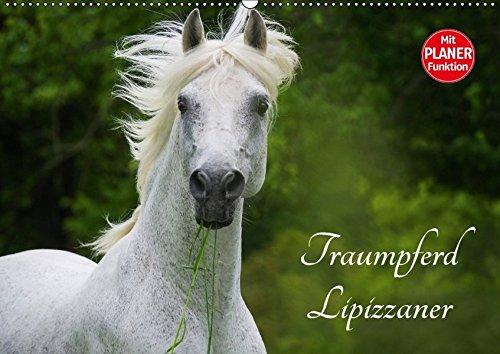9783665379674 - Sigrid Starick: Traumpferd Lipizzaner (Wandkalender 2017 DIN A2 quer): Lipizzaner auf den Weiden der Rhön auf 12 traumhaften Bildern (Geburtstagskalender, 14 Seiten ) - Book