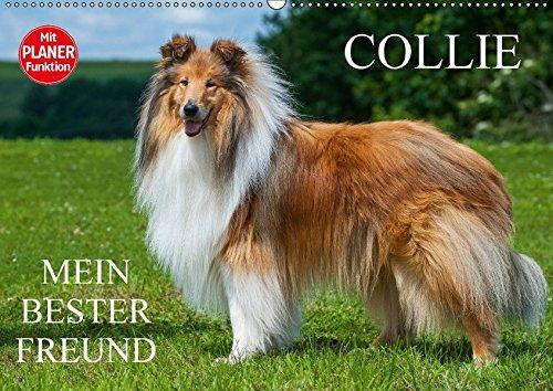 9783665379834 - Sigrid Starick: Collie - Mein bester Freund (Wandkalender 2017 DIN A2 quer): Eine der schönsten Hunderassen der Welt auf 13 zauberhaften Fotos (Geburtstagskalender, 14 Seiten ) - Book