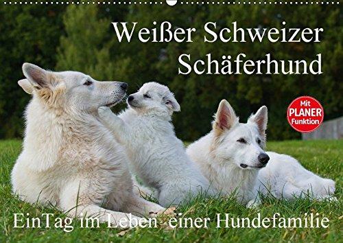 9783665379919 - Sigrid Starick: Weißer Schweizer Schäferhund - Ein Tag im Leben einer Hundefamilie (Wandkalender 2017 DIN A2 quer): Auf 13 Kalenderblättern läßt uns die ... teilhaben (Geburtstagskalender, 14 Seiten ) - Book