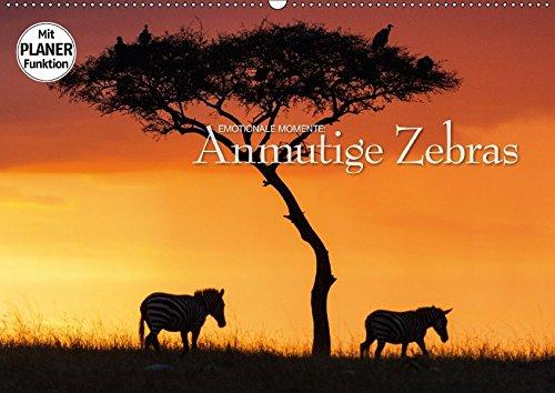 9783665382551 - Ingo Gerlach GDT: Emotionale Momente: Anmutige Zebras (Wandkalender 2017 DIN A2 quer): Dramatische und zugleich wunderschöne Bilder von Afrikas Tierleben. (Geburtstagskalender, 14 Seiten ) - Book