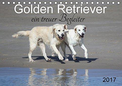 9783665384401: Golden Retriever ein treuer Begleiter (Tischkalender 2017 DIN A5 quer): Weiße und goldene Retriever (Monatskalender, 14 Seiten)