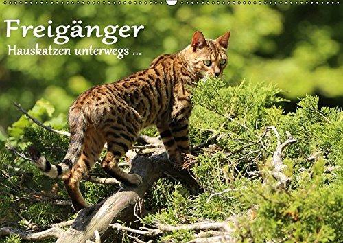 9783665391973: Freigänger - Hauskatzen unterwegs (Wandkalender 2017 DIN A2 quer): Hauskatzen in freier Natur (Monatskalender, 14 Seiten )