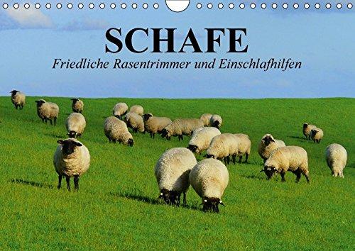 9783665418304: Schafe. Friedliche Rasentrimmer und Einschlafhilfen (Wandkalender 2017 DIN A4 quer): Nützliche Wollknäuel und Bereicherung der Landschaften (Geburtstagskalender, 14 Seiten )