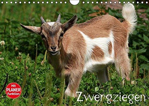 9783665427740: Zwergziegen (Wandkalender 2017 DIN A4 quer): Die wohl bekannteste Ziege (Geburtstagskalender, 14 Seiten)