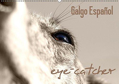 9783665433796: Galgo eye-catcher (Wandkalender 2017 DIN A2 quer): Sepia-colorierte Fotos vom Galgo Español (Monatskalender, 14 Seiten)