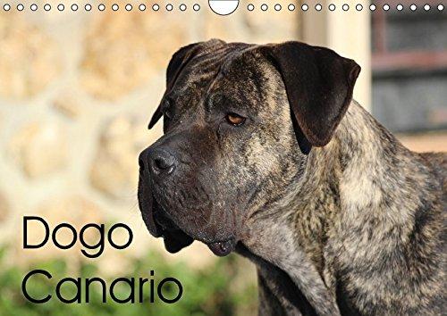9783665494582: Dogo Canario (Wandkalender 2017 DIN A4 quer): Eine spanische Hunderasse mit Ursprung auf Teneriffa und Gran Canaria (Geburtstagskalender, 14 Seiten )