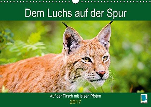 9783665583750 - CALVENDO: Dem Luchs auf der Spur (Wandkalender 2017 DIN A3 quer): Auf der Pirsch mit leisen Pfoten (Geburtstagskalender, 14 Seiten ) - Buch