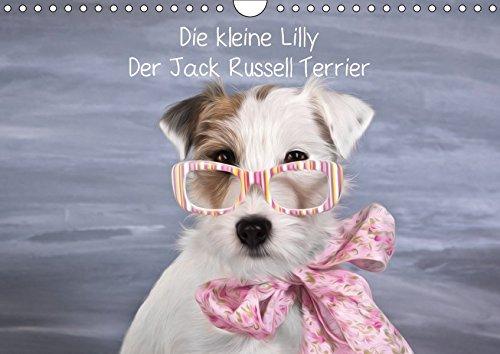 Die kleine Lilly. Der Jack Russell Terrier: Monika Leirich