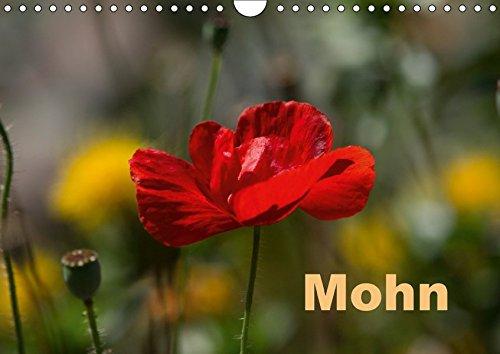 Mohn (Wandkalender 2018 DIN A4 quer): Mohnblüte,: Erwin Renken