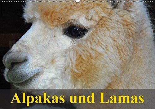 9783665831776 - Elisabeth Stanzer: Alpakas und Lamas (Wandkalender 2018 DIN A2 quer): Südamerikas wuschelige und spuckende Wiederkäuer (Geburtstagskalender, 14 Seiten ) - Knjiga