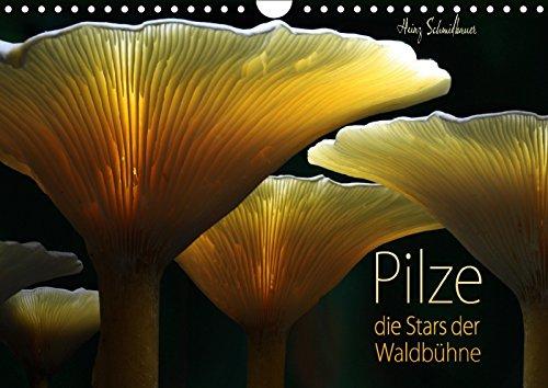 Pilze - die Stars der Waldbühne (Wandkalender: Heinz Schmidbauer