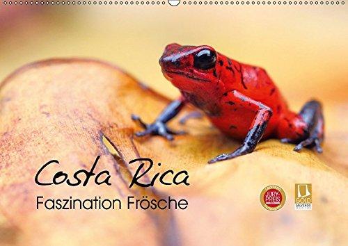 Costa Rica - Faszination Frösche (Wandkalender 2018: Kevin Eßer