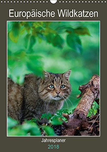 9783669394352 - Webeler, Janita: Europäische Wildkatzen - Jahresplaner (Wandkalender 2018 DIN A3 hoch) - Buch
