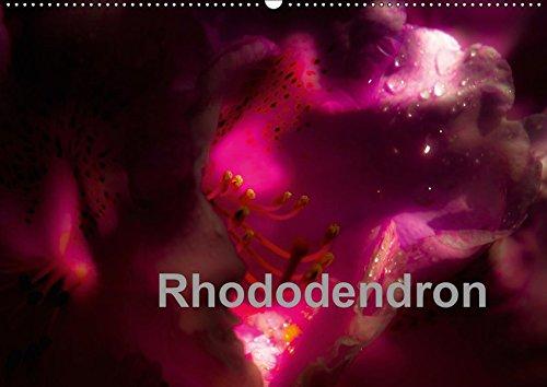 Rhododendron (Wandkalender 2019 DIN A2 quer): Rhododendronblüten: Erwin Renken